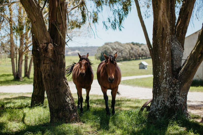NSW country wedding venues