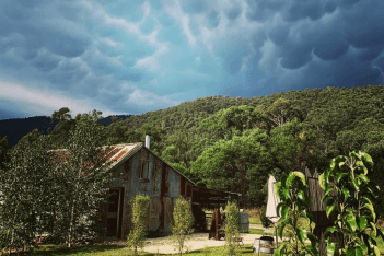 Burrow and Nest
